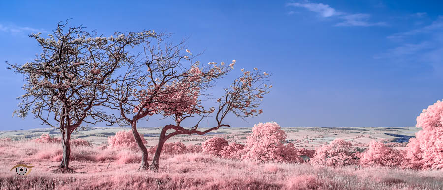 Infrared photography with modified cameras